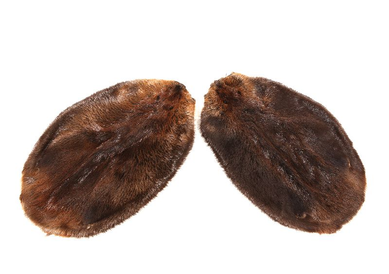 Two beaver pelts laid side by side with the fur showing.
